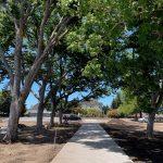 Shaded Promenade